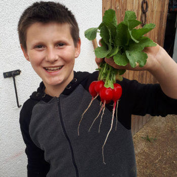Michael bei der Ernte