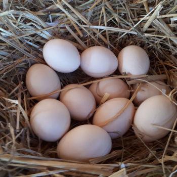 Eier von glücklichen hünern